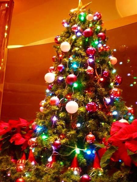 クリスマスツリーの画像 p1_26