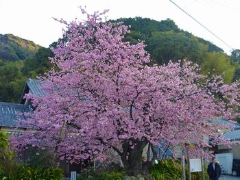 http://img01.i-ra.jp/usr/k/a/i/kaikainfo/P1080466.jpg