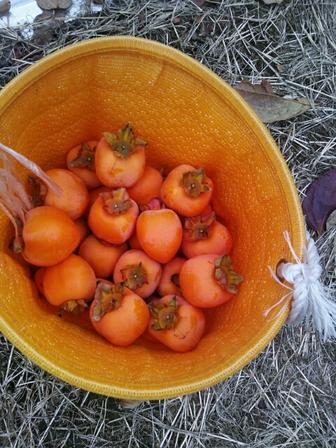 カキの渋の抜き方 - 初心者の果樹栽培 庭植え鉢植 …