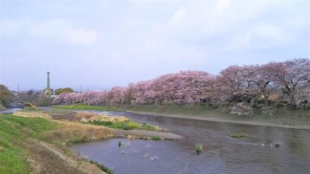 龍巌淵の桜[平成30年(2018年)4...