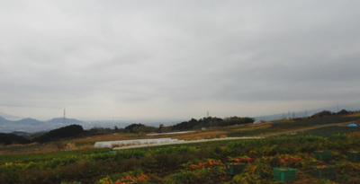 箱根西麓風景